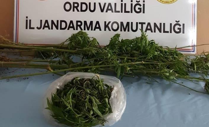 Ordu'da uyuşturucu operasyonu - 1 gözaltı