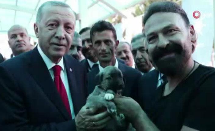 Erdoğan'a Kangal yavrusu hediye edildi
