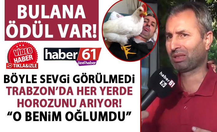 Trabzon'da her yerde horozunu arıyor: Oğlumu kaybettim!