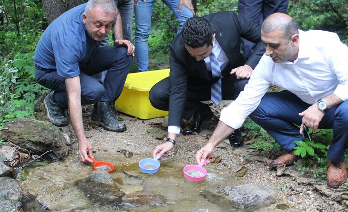 Alabalık yavruları suyla buluştu