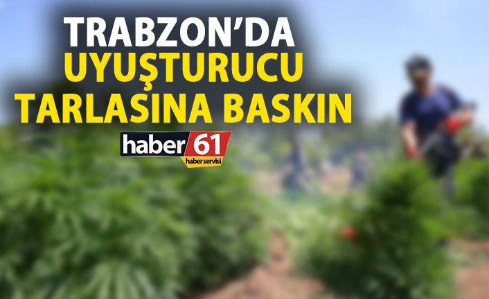 Trabzon'da uyuşturucu tarlasına baskın!