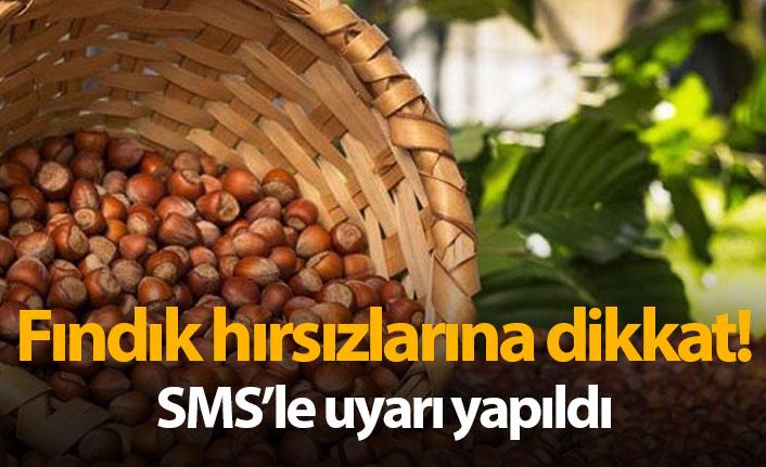 Trabzon'da fındık hırsızları iş başında! SMS'li uyarı yapıldı