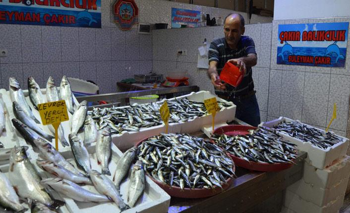 Trabzon'da yerli hamsi balıkçıları endişelendirdi