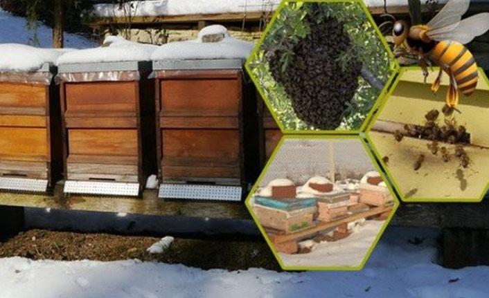 Arıcılara önemli bakım uyarısı