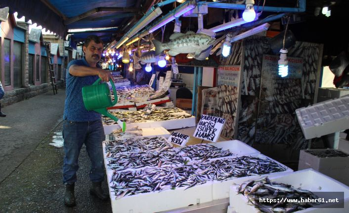 Karadeniz'de su ısındı balık azaldı!