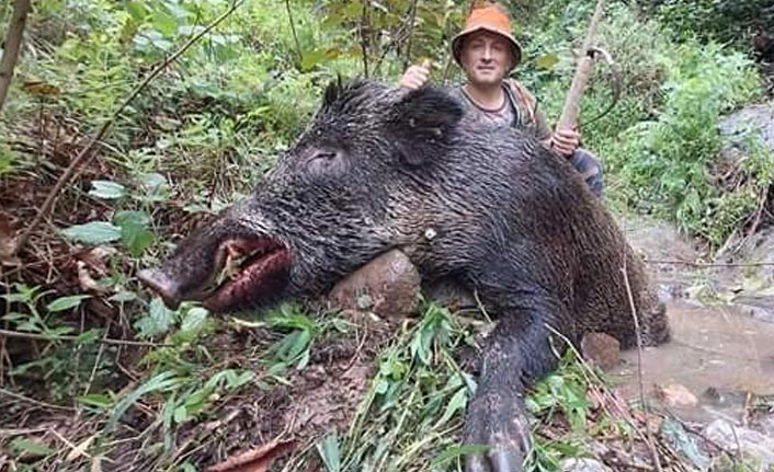 250 kiloluk dev domuz...