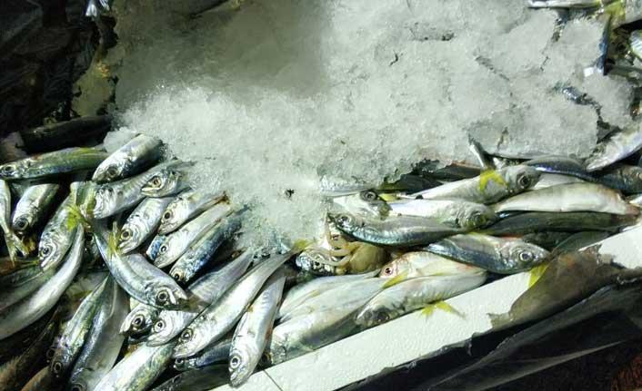 Otobüs bagajındaki 1,5 ton balığa el konuldu