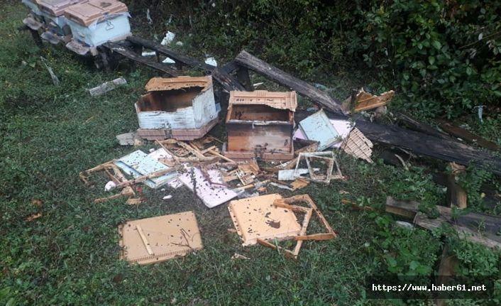 Ayılar arı kovanlarını parçaladı
