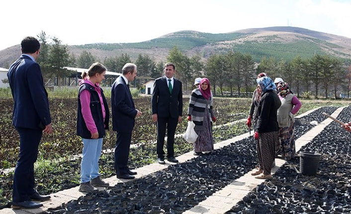 Vali Epcim, Orman Fidanlık Şefliğini ziyaret etti