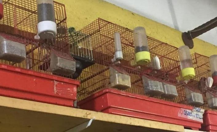 Koruma altındaki kuşları kafeste besledi cezayı yedi