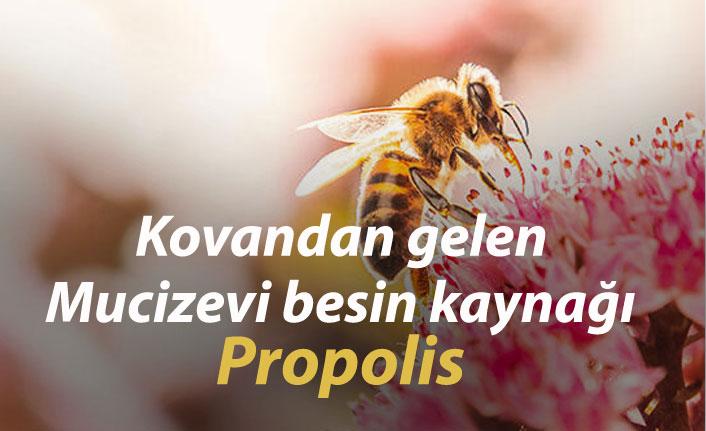 Kovandan gelen mucizevi besin kaynağı: Propolis