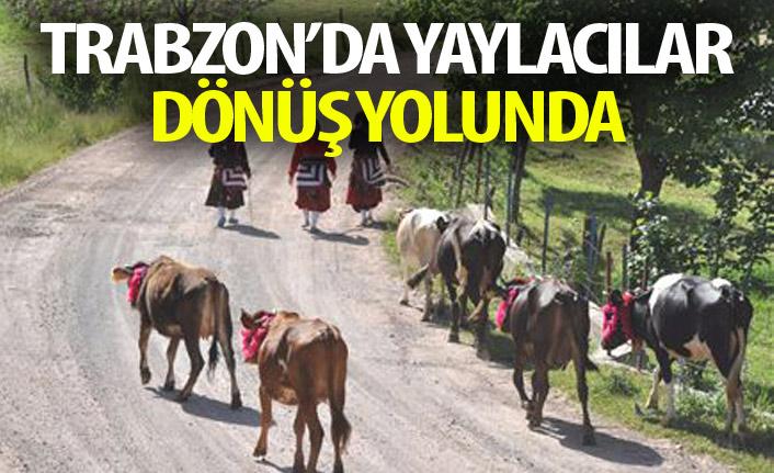 Trabzon'da yaylacılar dönmeye başladı