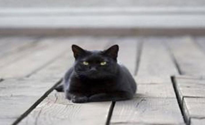 Otoyola çıkan kedi kaaya neden oldu