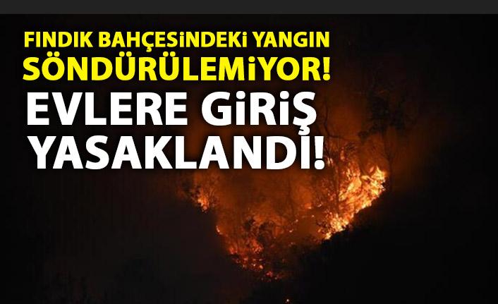Fındık bahçesinde yangın söndürülemiyor! Evlere giriş yasaklandı!