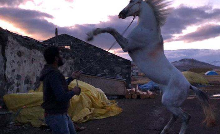 Hayatını atına borçlu! Ameliyat gününü beklerken...