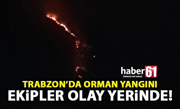 Trabzon'da Orman Yangını! Müdahale edilemiyor!
