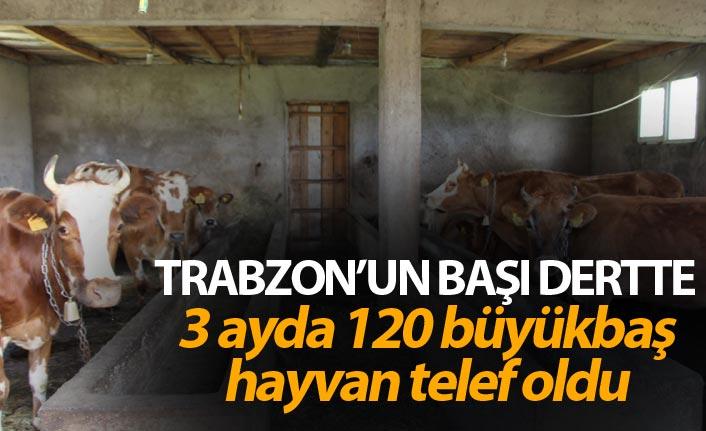 Trabzon'un başı dertte - 3 ayda 120 büyükbaş hayvan telef oldu