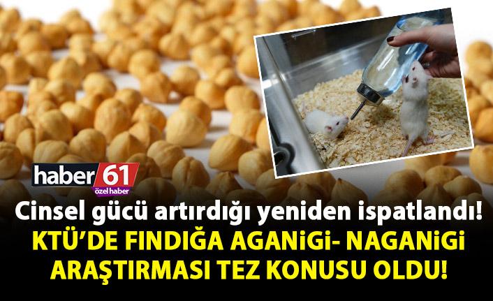 KTÜ'de Fındığa 'aganigi-nagani' araştırması tez konusu oldu