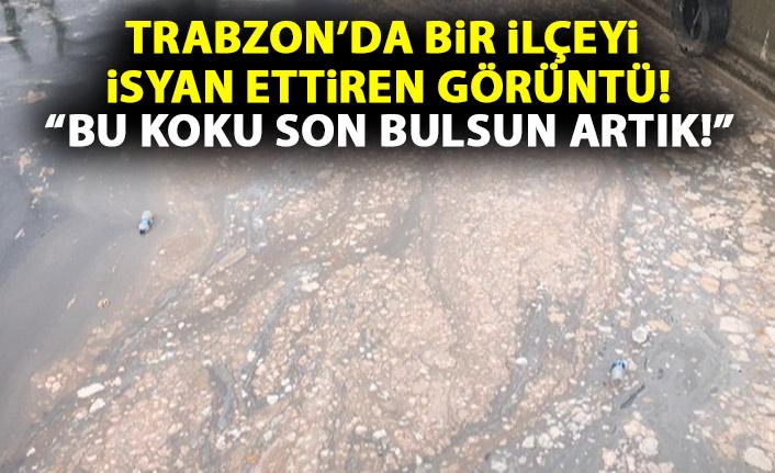 Trabzon'da hamsi kokusu tepkisi artıyor!