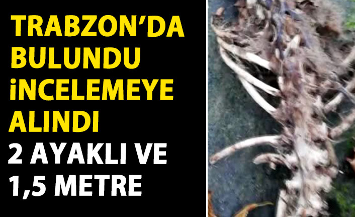 Trabzon'da bulunan iskeletin türü belirlenemedi!