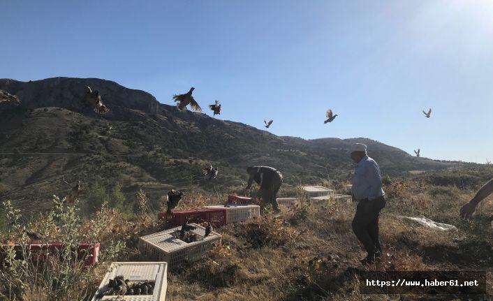 100 bin kanatlı doğaya salındı