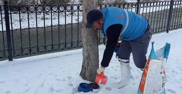 Bayburt'ta sokakta kalan havyanlar unutulmadı