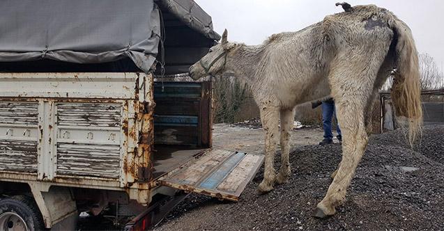 Hayvanlara kötü muameleye 49 bin TL ceza!