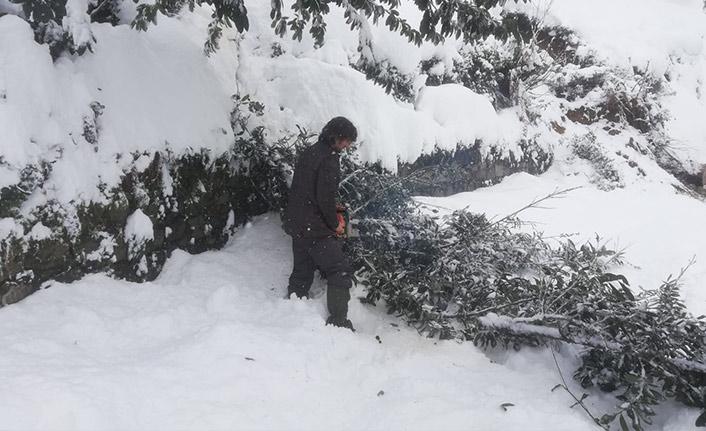 Kara dayanamayan ağaç yüksek gerilim hattını kopardı