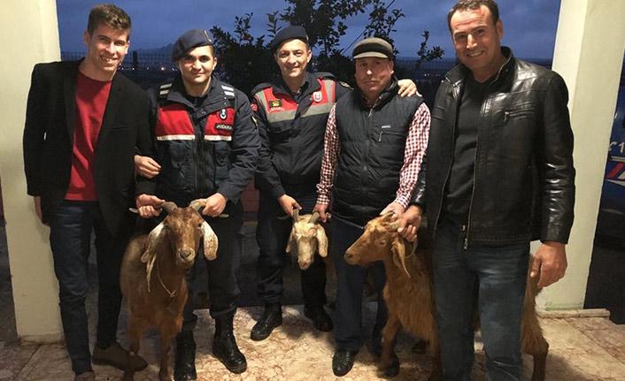 Alkol almak için keçi çaldılar