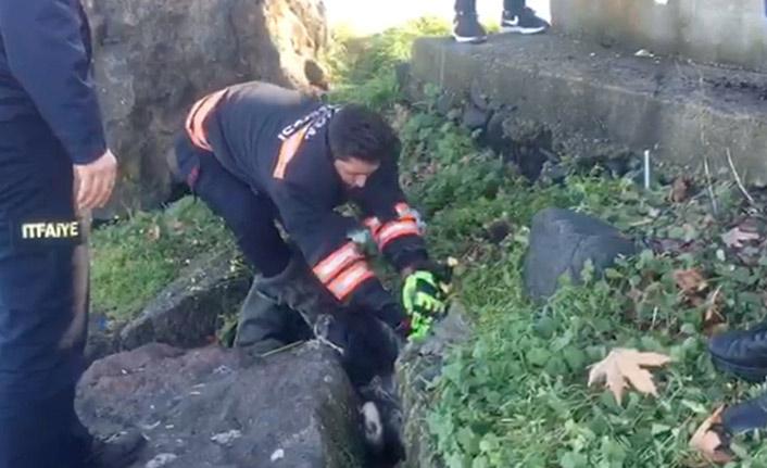 Trabzon'da köpek kurtarma operasyonu