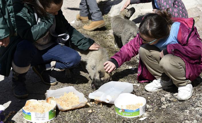 Bu okulda artan yemekler hayvanların
