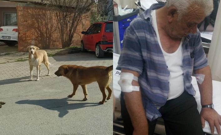 Başıboş köpekler yaşlı adamı hastanelik etti!