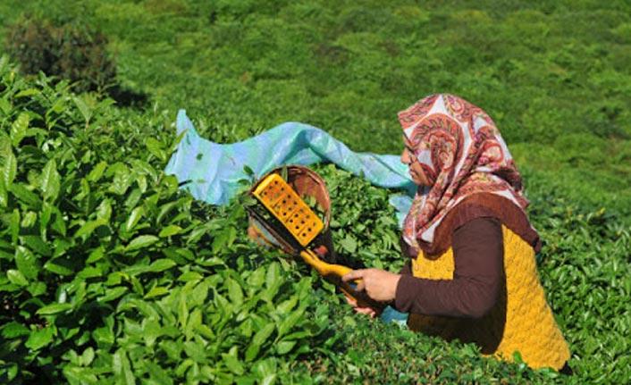 Çay üreticisine Korona virüs uyarısı