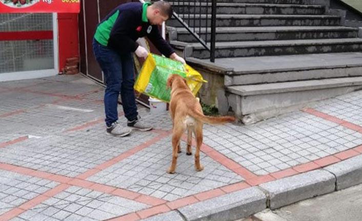 Rize'de sokak hayvanları unutulmadı