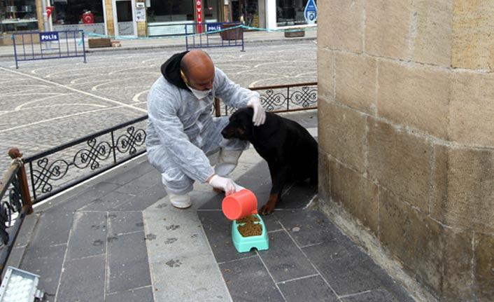 Bayburt'ta sokak hayvanları unutulmadı