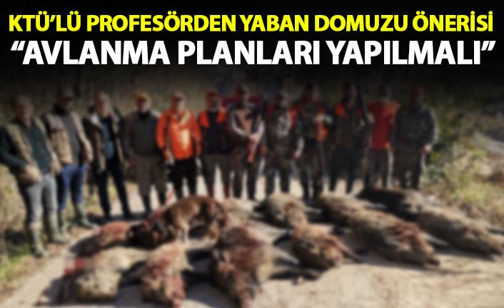 KTÜ'lü profesörden yaban domuzu önerisi: Avlanma planları yapılmalı