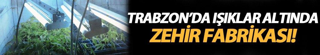 Trabzon'da özel düzenek ile esrar yetiştiriciliği
