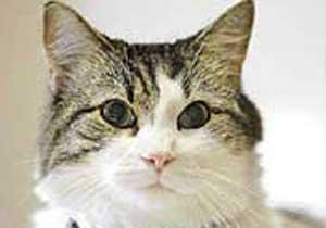 Trabzon'da kedileriyle yaşıyor