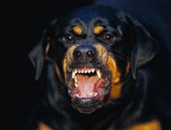 Rottweiler'lı bina yönetimi