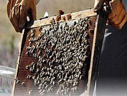 Rize'de vatandaşı arı soktu hayatını kaybetti