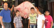 Bu balık Marmara'da yakalandı!