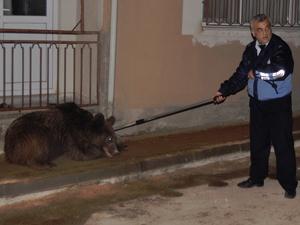Şehrin göbeğinde ayı operasyonu