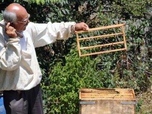 5 bin liralık arı sütüne rağbet çok