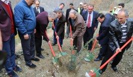 Karadeniz'de 5 bin köye 5 bin orman