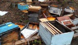 Ayı köye dadandı arı kovanlarını parçaladı