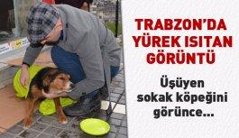 Trabzon'da üşüyen sokak köpeğine şefkat...