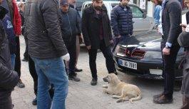 Otomobilin çarptığı yaralı sokak köpek için...