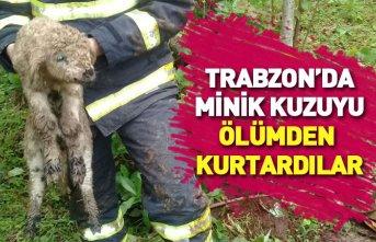 Trabzon'da kuzuyu kurtarma operasyonu