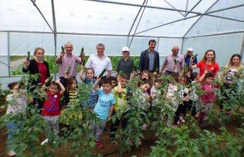 Öğrenciler sebze fidesi dikerek hasat yaptı