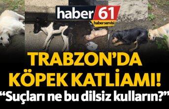 Trabzon'da köpek katliamı! Köpekleri zehirlediler...